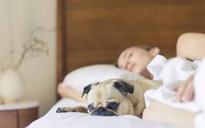 Wissen aneignen durch gesunden Schlaf
