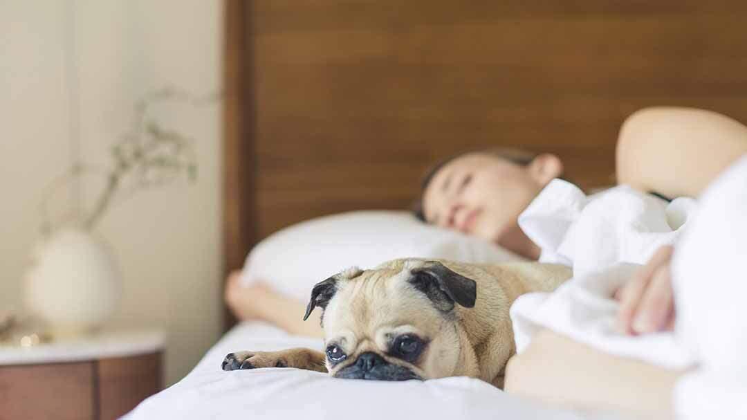 Schlafen und Speichern